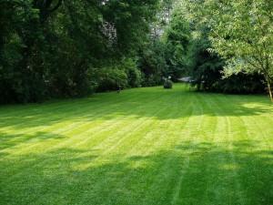 Ann Arbor Lawn Service Lawn Care