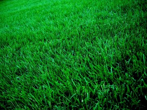 Ann Arbor Lawn Service Seeding Sod